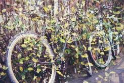 Doppelbelichtung Fahrrad Blätter