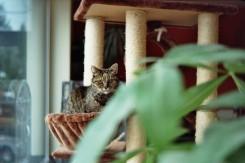 Katze auf dem Kratzbaum