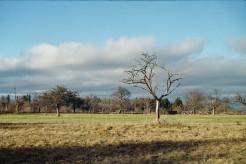 Wiese mit Bäumen im Winter